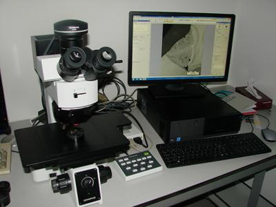 Olympus microscoop met 'Stream' software